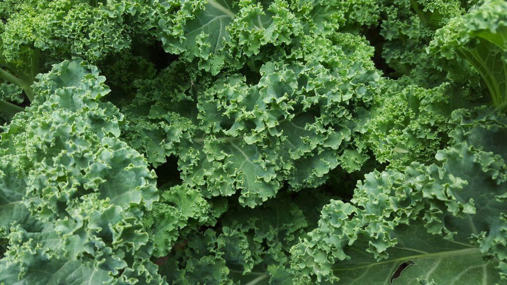 jarmuż i inne zielone warzywa liściaste obniżają cholesterol